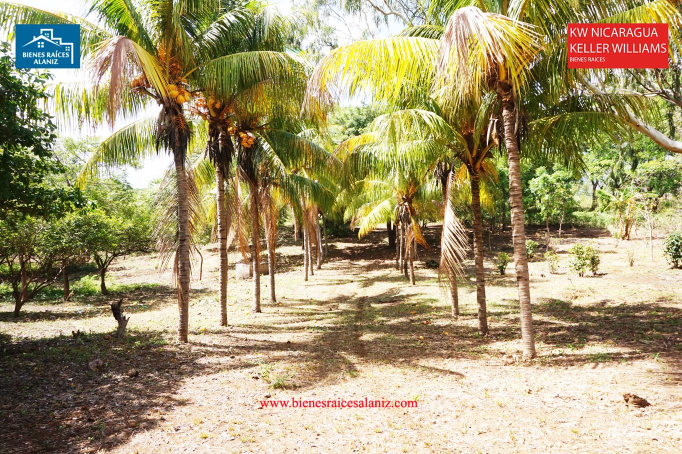 Se vende lote de terreno de 11,000 v2 en Cedro Galán, Carretera Vieja a León, en Managua